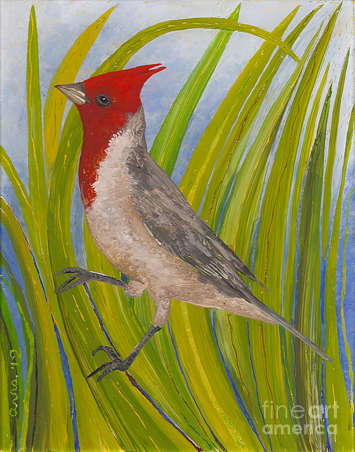 Kauai Birds Painting - Red-crested Cardinal by Anna Skaradzinska
