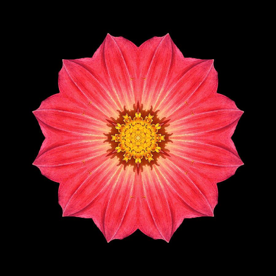 Flower Photograph - Red Dahlia Hybrid I Flower Mandala by David J Bookbinder