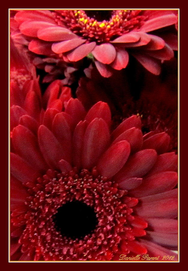 Beauty In Nature Photograph - Red Daisies by Danielle  Parent