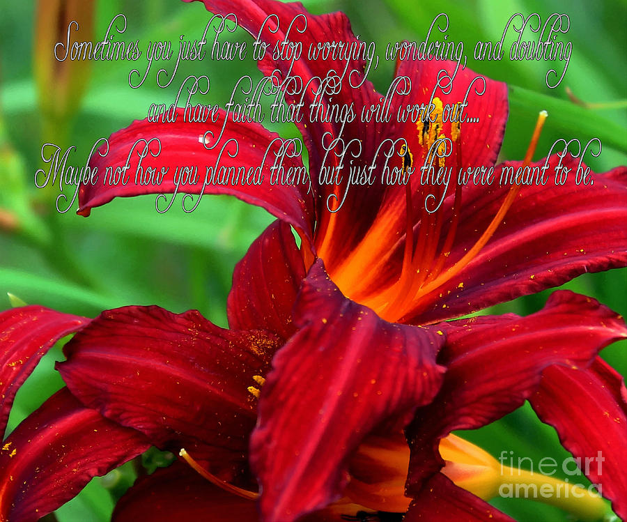 Barbara Griffin Photograph - Red Day Lily And Quote by Barbara Griffin