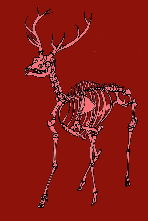 red-deer-stag-skeleton-claudia-stockersc
