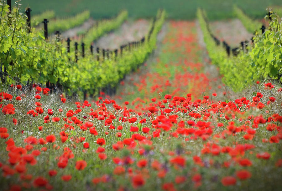 Landscape Photograph - Red District by Ales Komovec