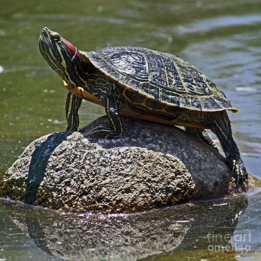 фото водоплавающих черепах полетов клево