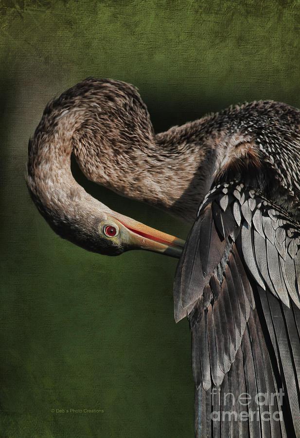 Bird Photograph - Red Eye Beauty by Deborah Benoit