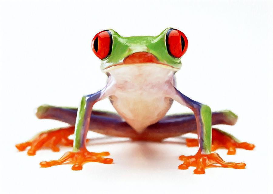 Amphibian Painting - Red-eye Tree Frog 2 by Lanjee Chee
