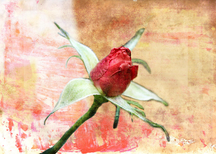 Red Flower 1 by Helene U Taylor