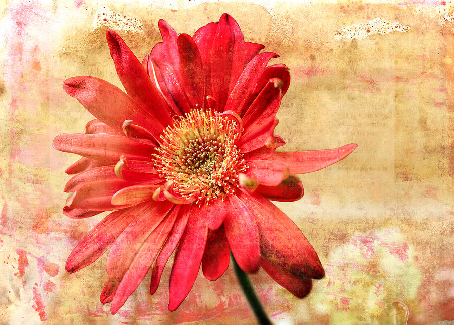 Red Flower 2 by Helene U Taylor