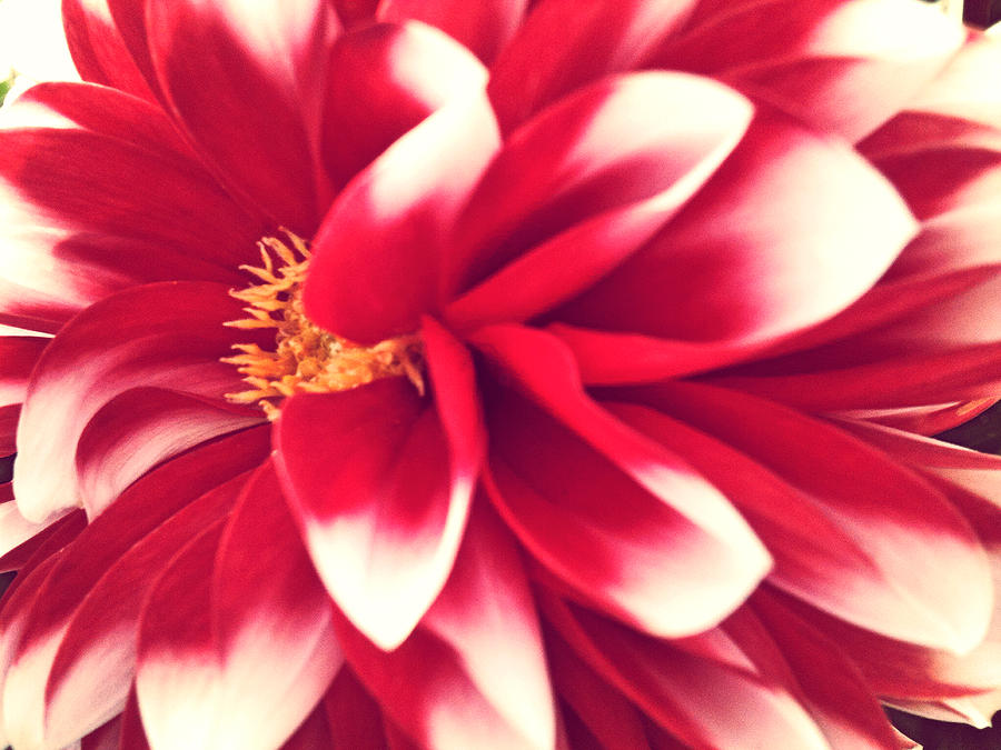 Red Photograph - Red Flower by Beril Sirmacek
