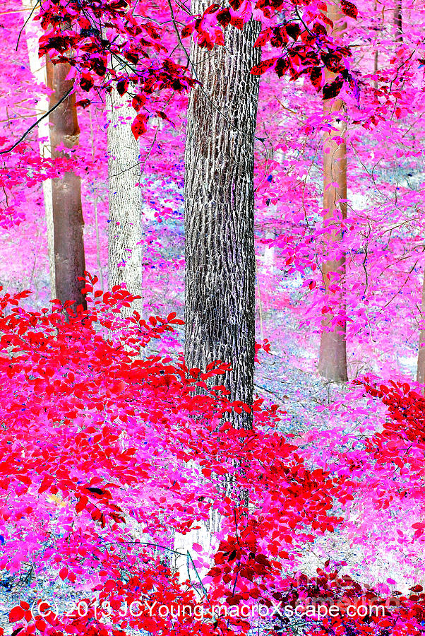 Red Forest Photograph by JCYoung MacroXscape