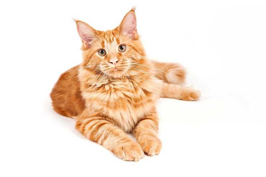 hydrangea and cats