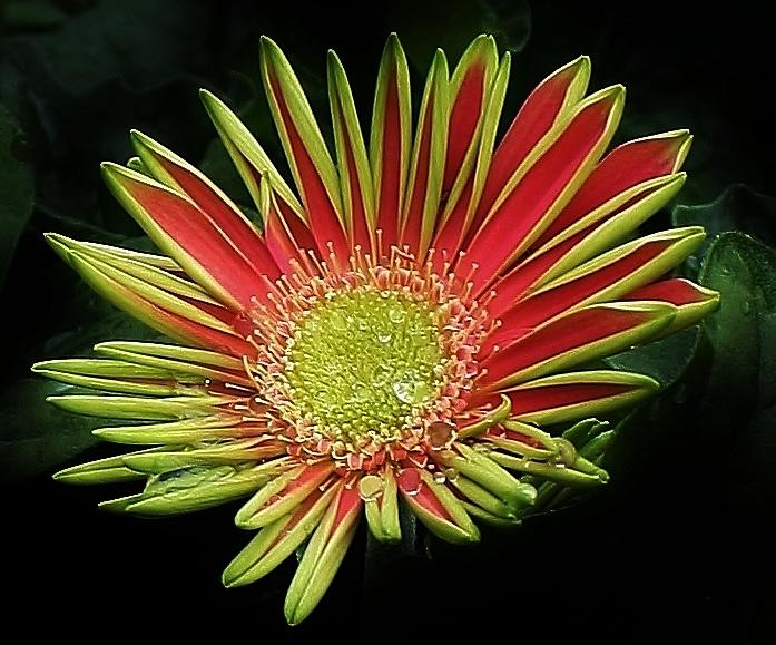 Flora Photograph - Red Gazania Blossom by Bruce Bley