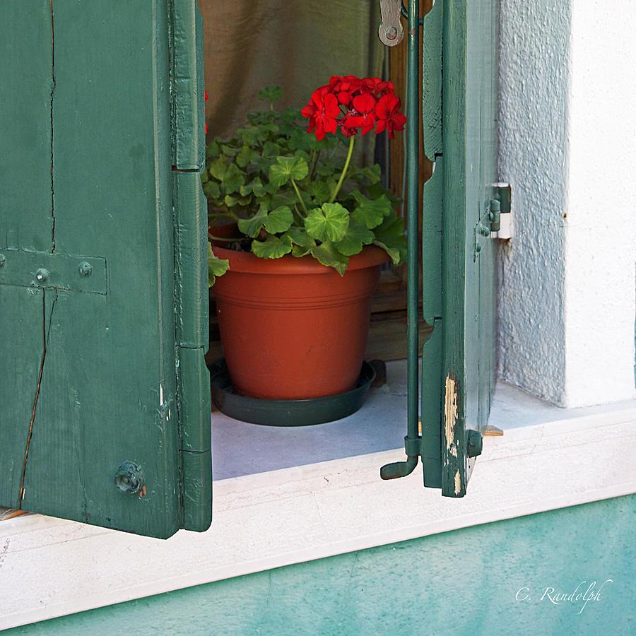Geranium Photograph - Red Geranium by Cheri Randolph