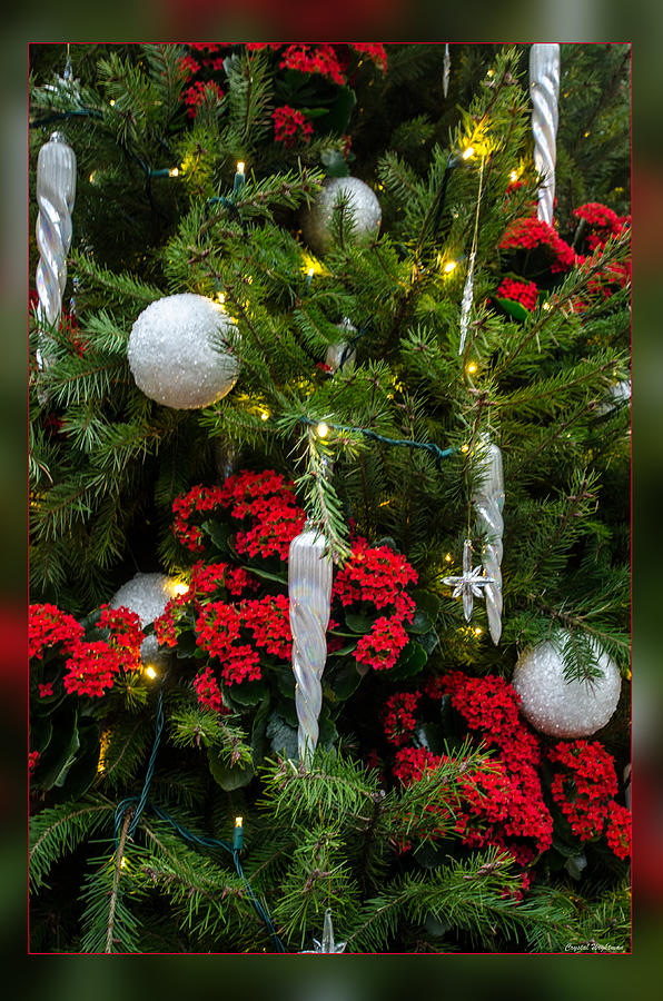 Red Green And Silver Balls Photograph
