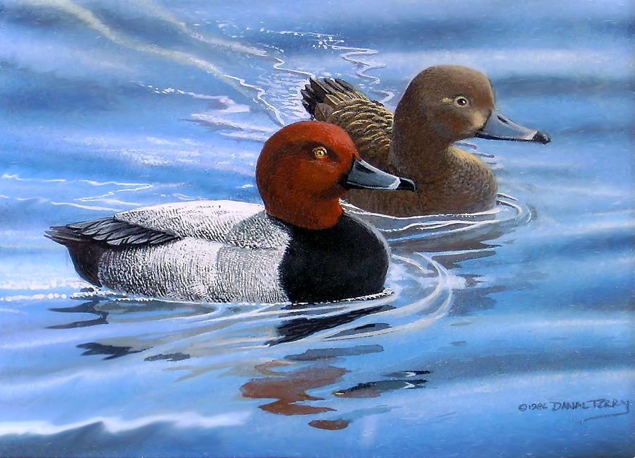 Red Painting - Red Headed Ducks by Dan Terry