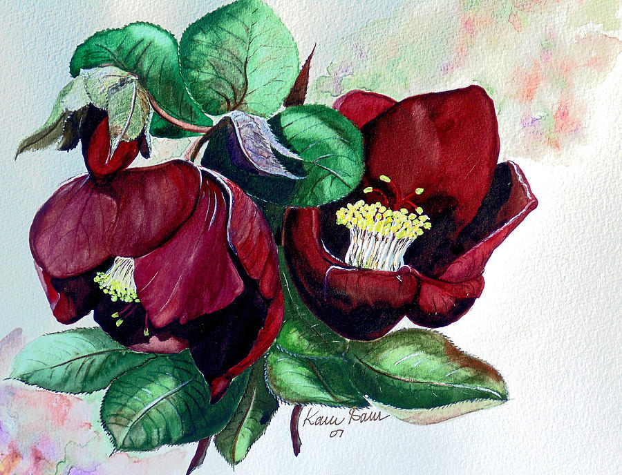 Red Helleborous Painting by Karin  Dawn Kelshall- Best