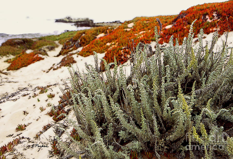 Red Ice On Beach 3 Photograph By Linda Parker