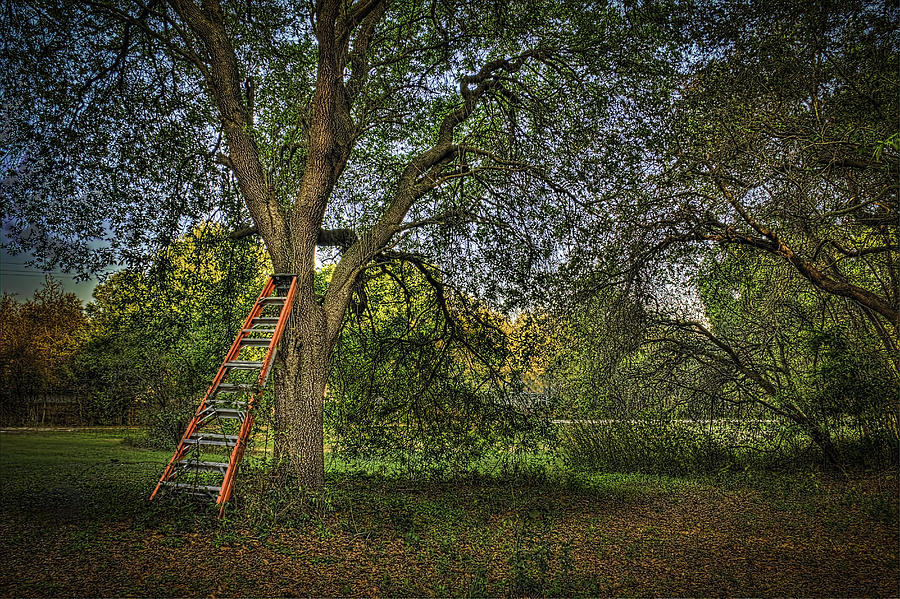 Ladders Photograph - Red Ladder And Oak by Marvin Spates