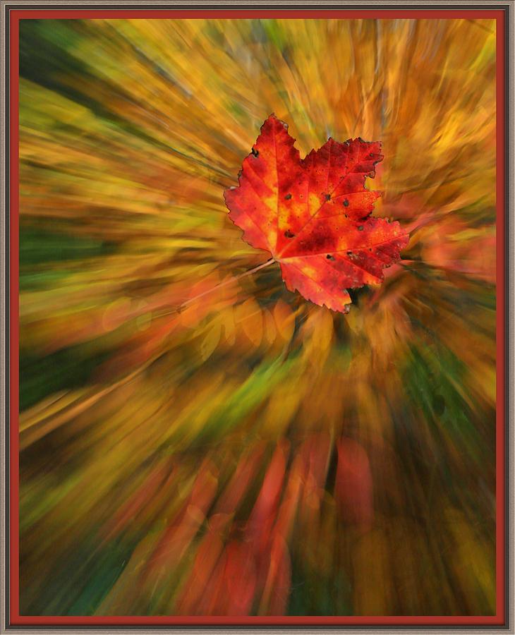 Red Leaf by Bobbie Turner