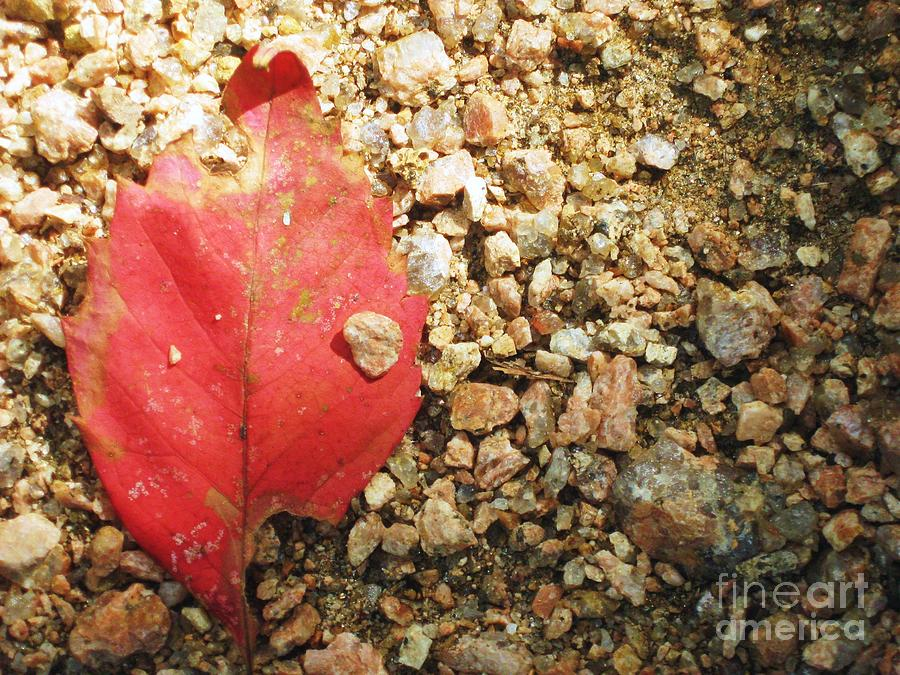 Photo Photograph - Red Leaf by Venus