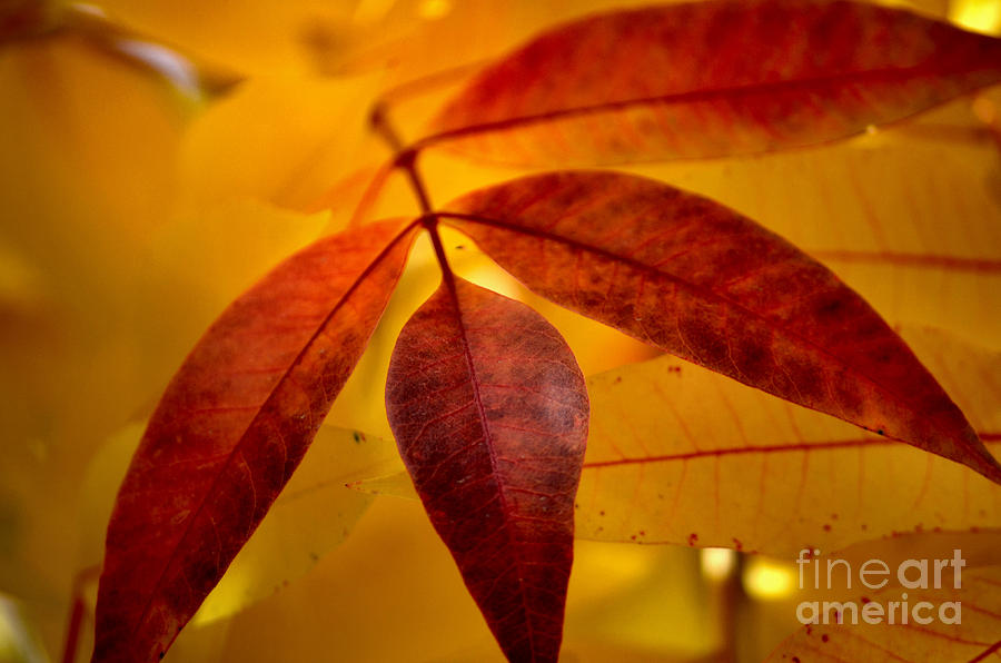 Red Leaves Photograph - Red Leaves At Dawn by Deb Halloran