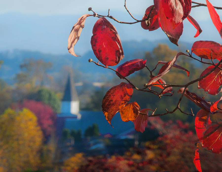 Photograph - Red Leaves Blue Mountain by Dorothy Walker