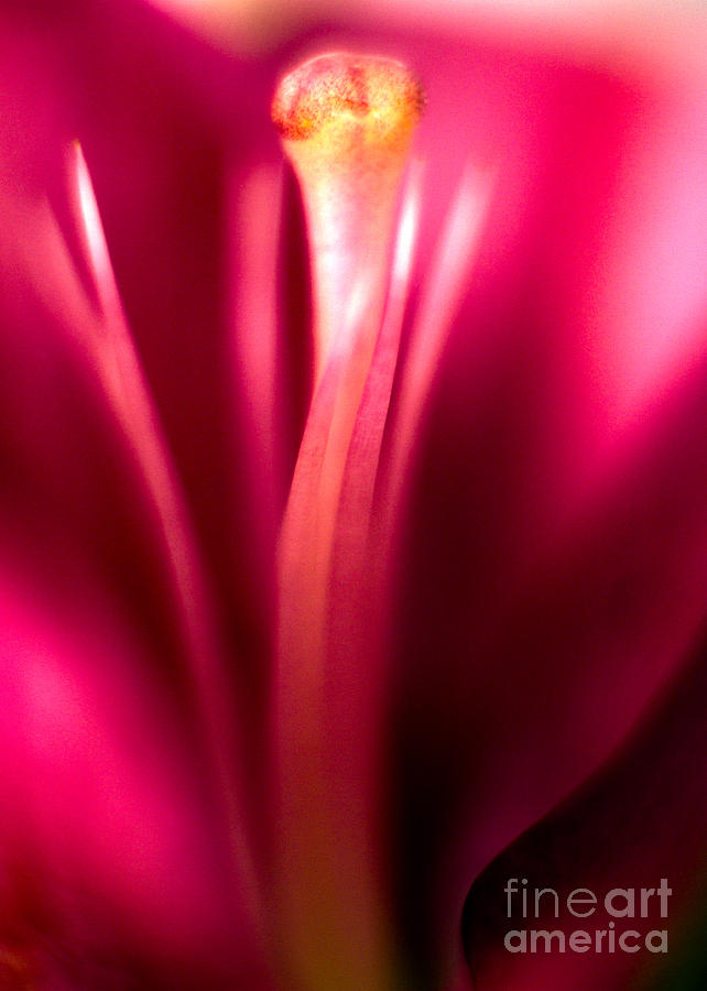 Anniversary Photograph - Red Lily  by Stelios Kleanthous