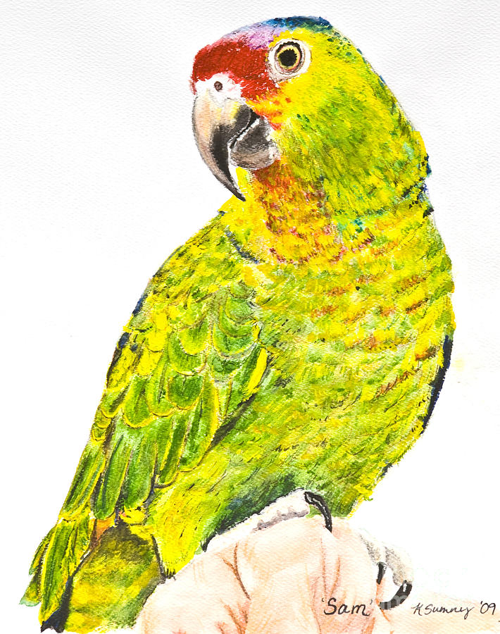 Red Lored Amazon Parrot In Watercolor Painting by Kate Sumners