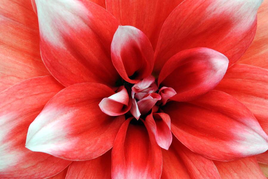 Red Photograph - Red N White- Viators Agonism by Vijinder Singh