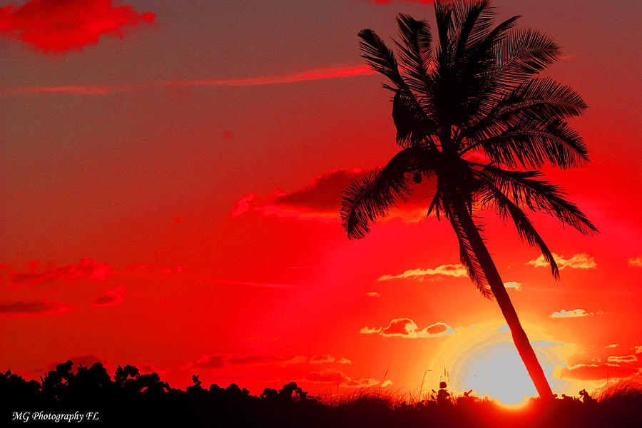 Sun Photograph - Red Palm by Marty Gayler