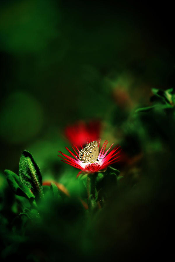 Red Photograph - Red Planet by Suradej Chuephanich