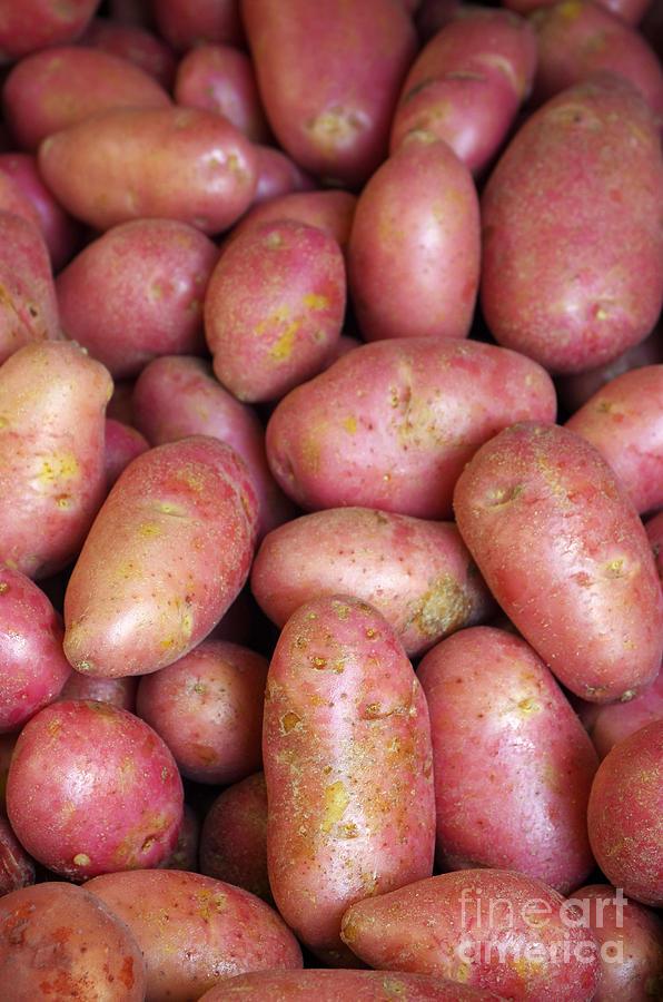 Farm Photograph - Red Potatoes by Carlos Caetano