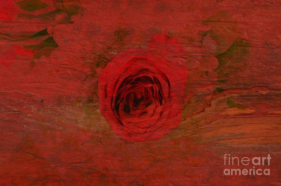 Flower Photograph - Red Red Rose by Kathleen Struckle