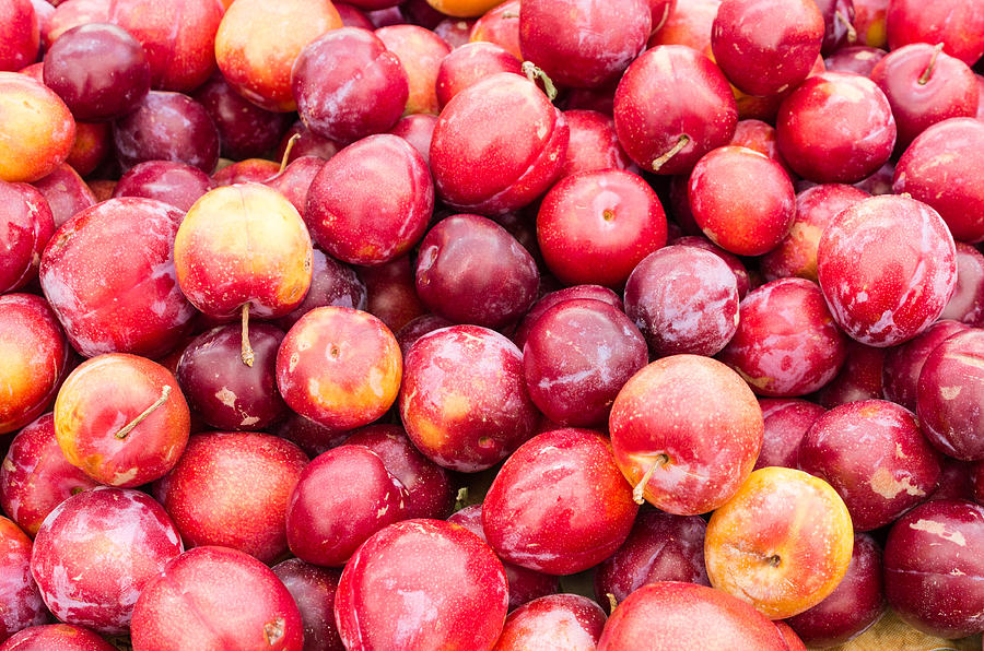 Food Photograph - Red Ripe Plums by John Trax