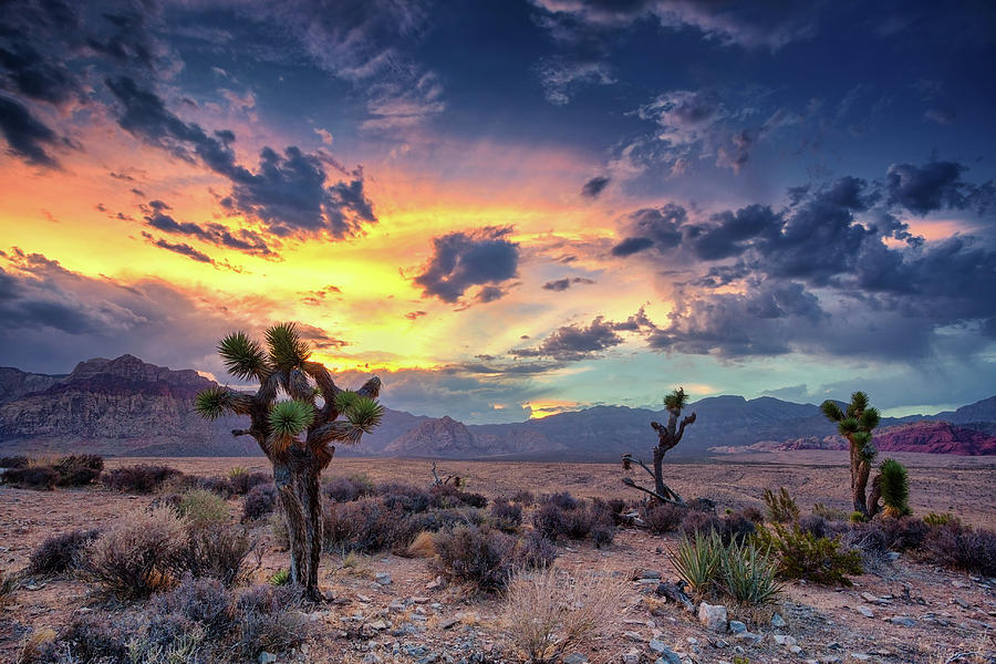 Red Rock Canyon Photograph by Eddie Lluisma