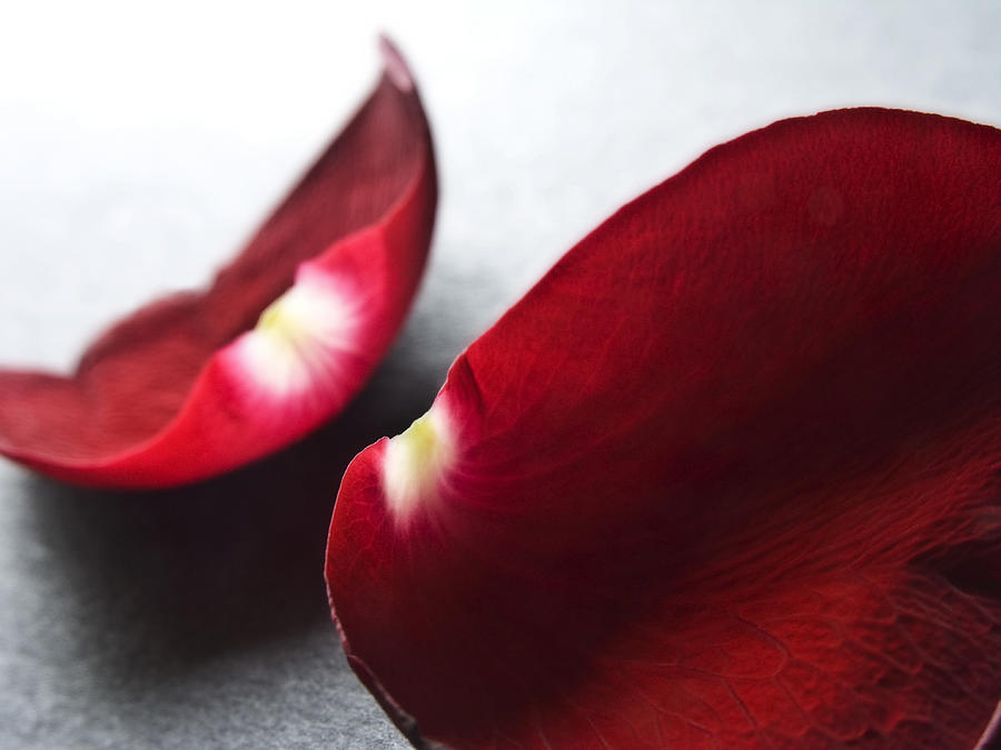 All Photograph - Red Rose Flower Petals Abstract II - Closeup Flower Photograph by Artecco Fine Art Photography