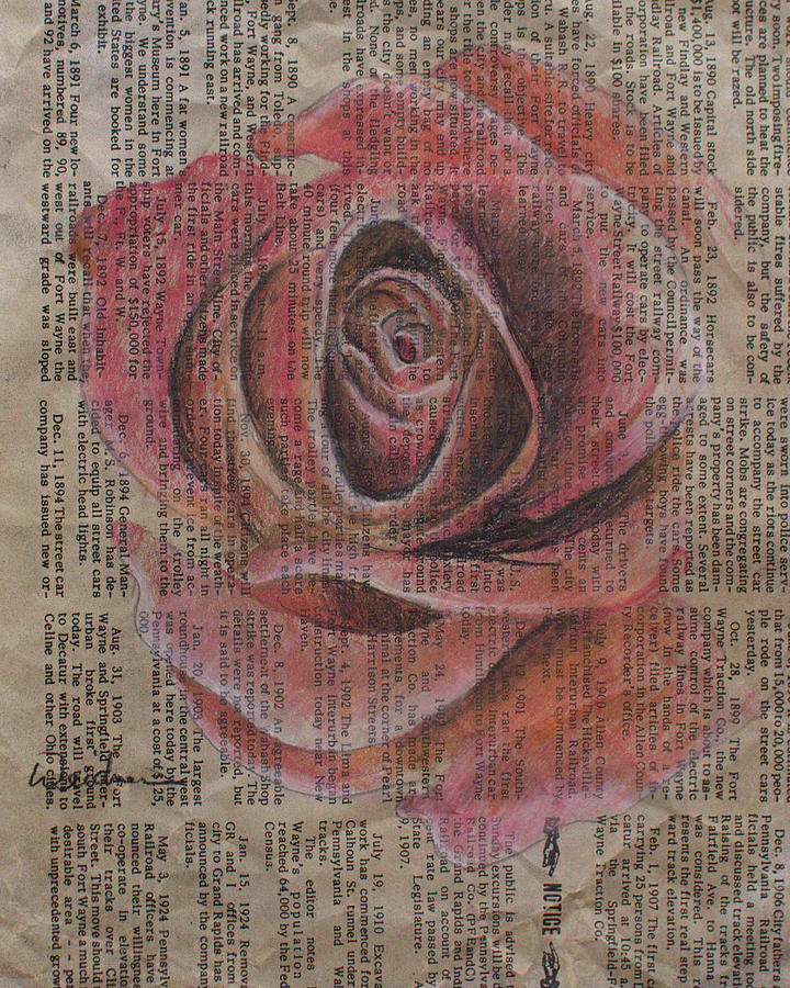 Rose Drawing - Red Rose by Kathy Weidner