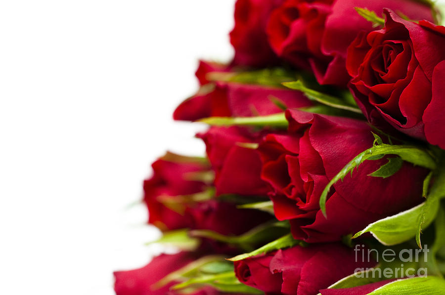 August Photograph - Red Roses by Anne Gilbert