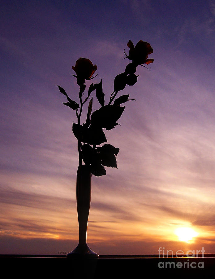 Rose Photograph - Red Roses At Sunset by Phil Perkins