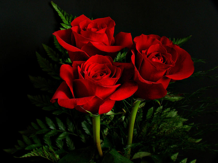 Image result for Red roses