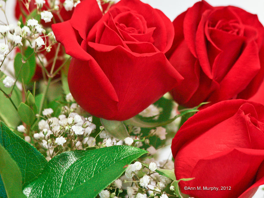 Flowers Photograph - Red Roses With Babys Breath by Ann Murphy