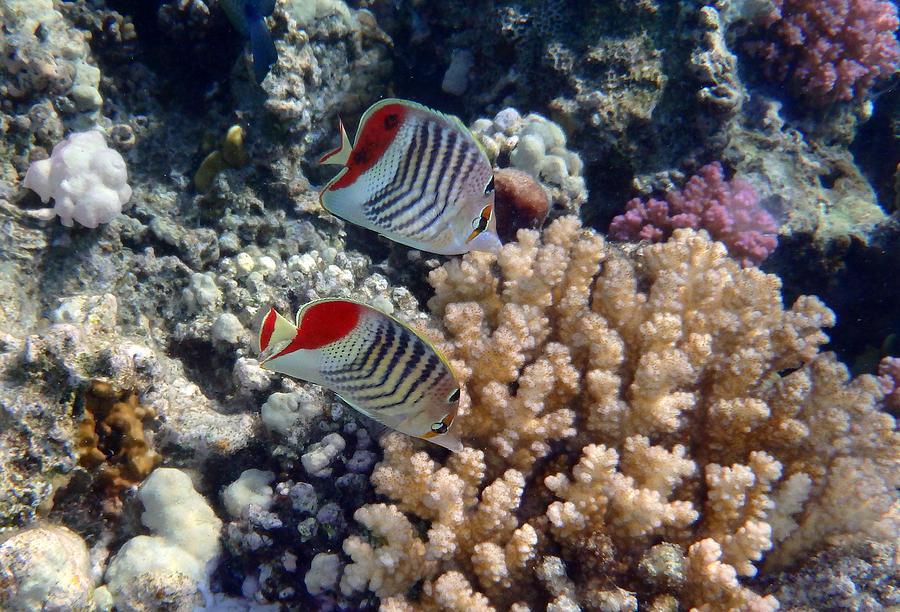 Sea Photograph - Red Sea Beauty 5 by Johanna Hurmerinta