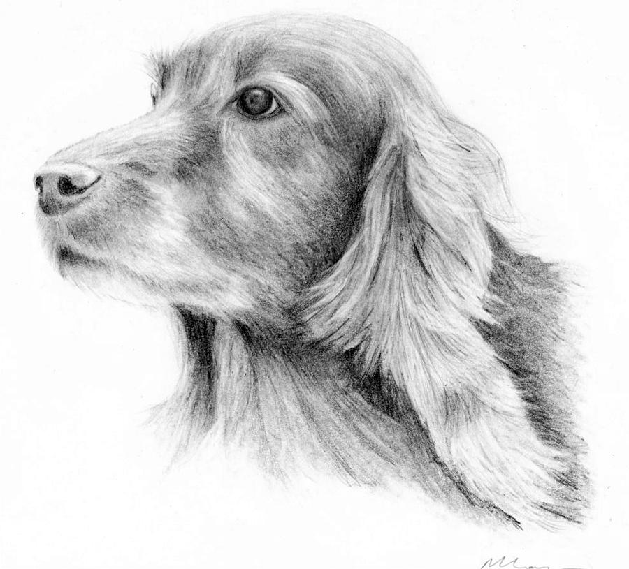 Red Setter Drawing - Red Setter by Mary Mayes