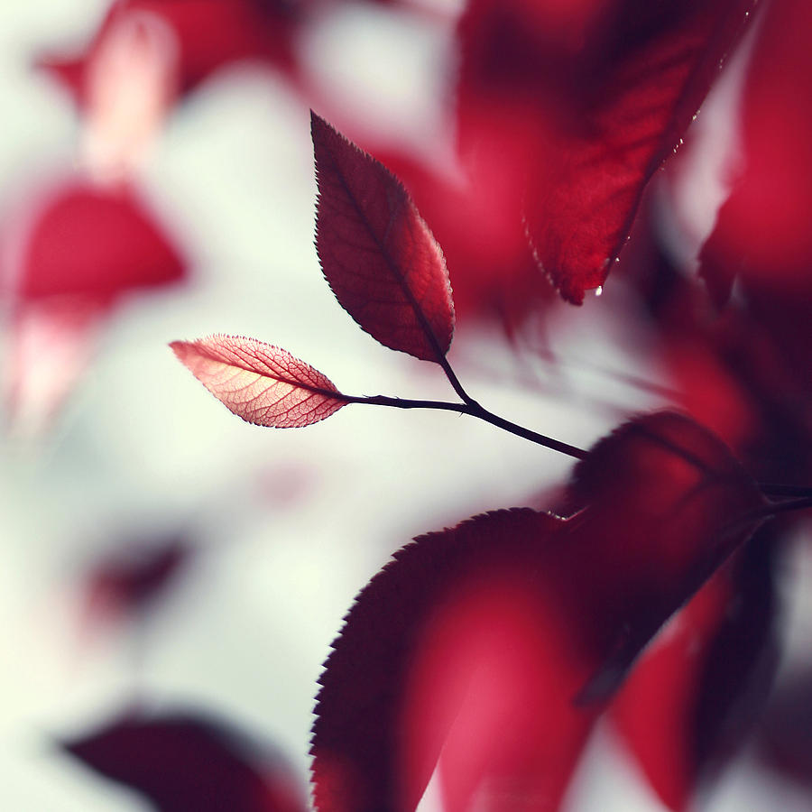 Red Photograph - Red Spring by Beata  Czyzowska Young