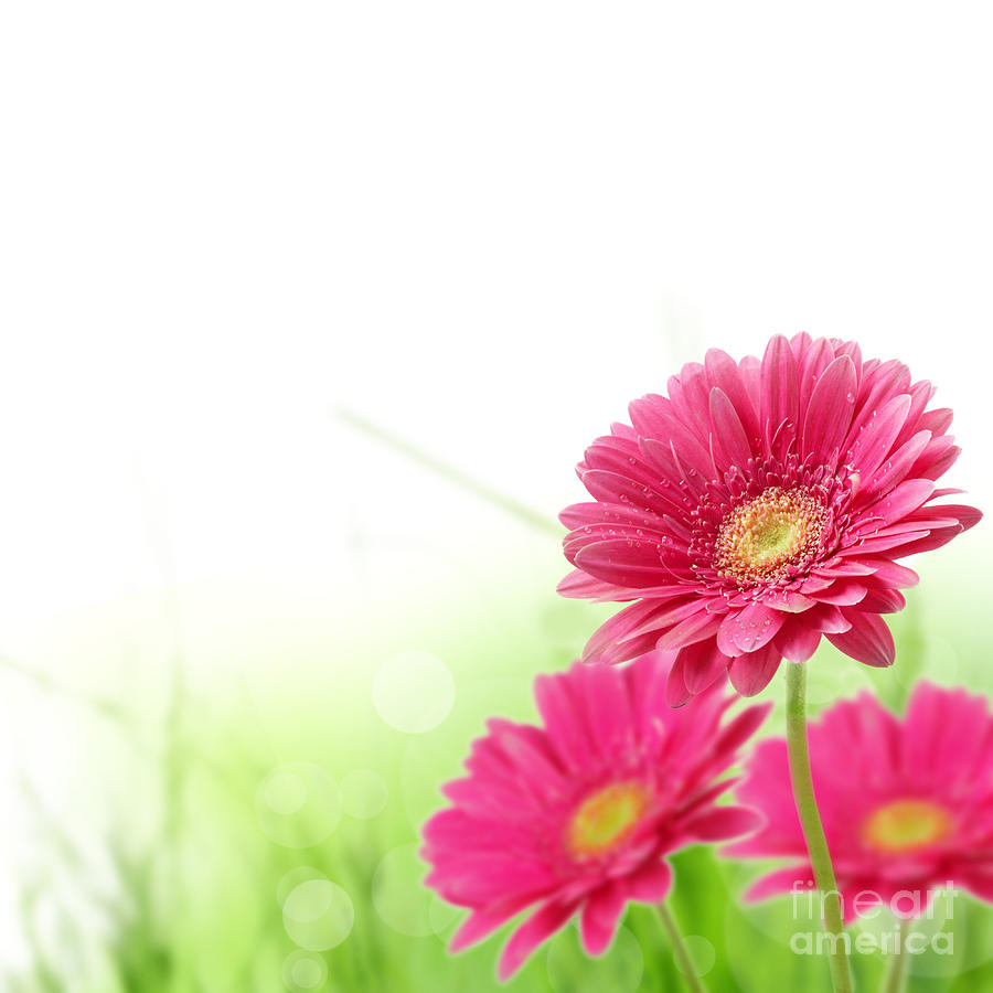 Red Spring Flowers Photograph By Boon Mee