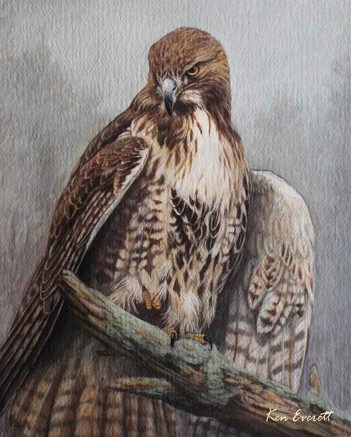 Red Tail Hawk Painting By Ken Everett