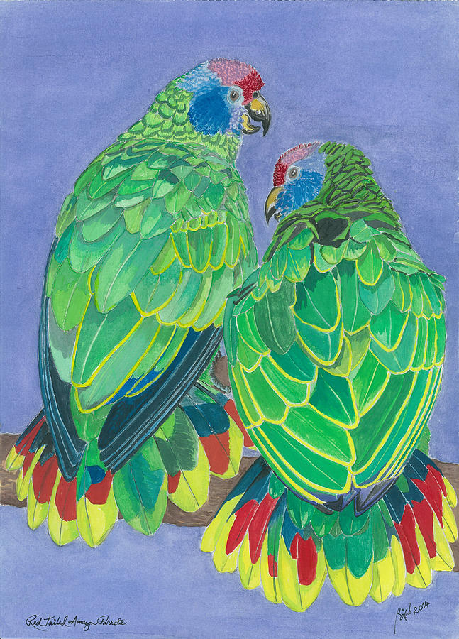 Bird Painting - Red Tailed Amazon Parrots by Anthony Purification