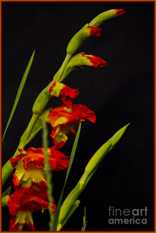 Photograph - Red by Timothy J Berndt