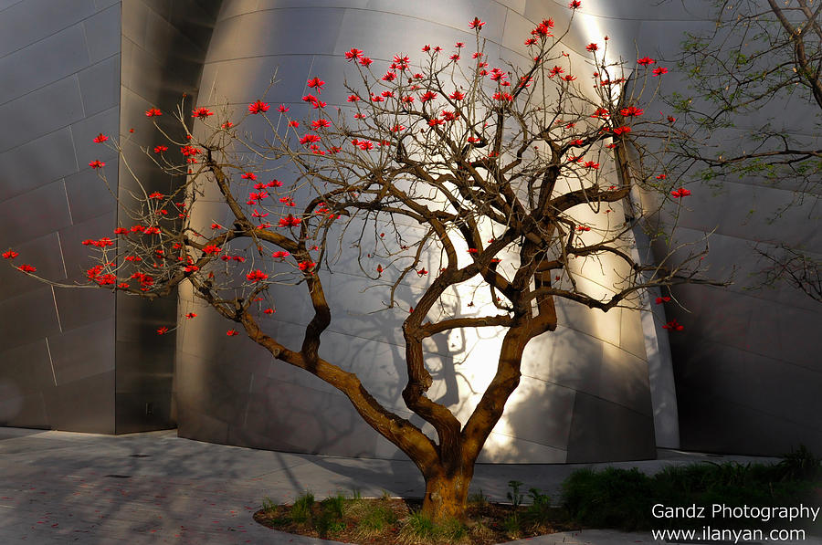 Red Tree Photograph - Red Tree  by Gandz Photography