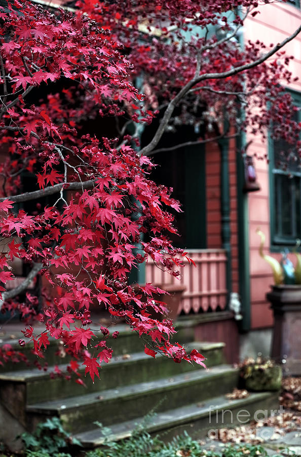 Red Tree Photograph - Red Tree by John Rizzuto