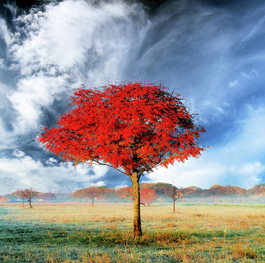 Red Tree Photograph by Ulrich Mueller